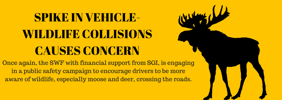 Spike in Vehicle-Wildlife Collisions Causes Concern