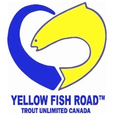 Yellow fish road logo